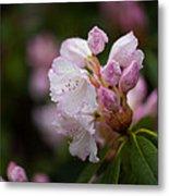 Rhododendron Enborne Metal Print