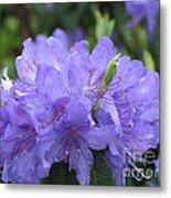 Rhododendron Impeditum Metal Print