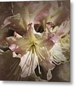 Rhododendron Mary Fleming Metal Print