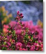Rhododendron Pink Dream Metal Print