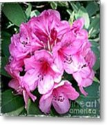 Rhododendron Square With Border Metal Print