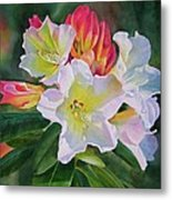 Rhododendron With Red Buds Metal Print