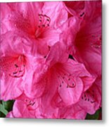 Rhody Girl Metal Print