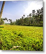 Rice Field Metal Print