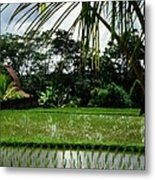 Rice Fields Bali Metal Print