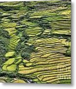 Rice Fields Sapa II Metal Print