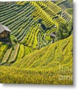 Rice Fields Terraces Metal Print