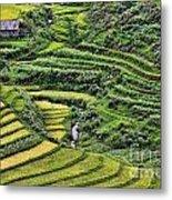 Rice Fields Vietnam Metal Print