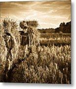 Rice Harvesting Metal Print