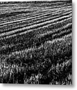 Rice Paddies Metal Print