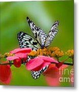 Rice Paper Butterflies Metal Print