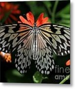 Rice Paper Butterfly Elegance Metal Print