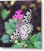 Rice Paper Butterfly Opulent Amenities 2 Metal Print