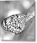 Rice Paper Butterfly Resting For A Second Metal Print