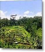 Rice Terrace In Bali Metal Print