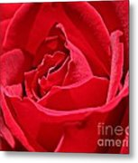 Rich Red Metal Print