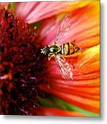Rich Reward Metal Print