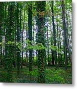 Ridgeway Trees Metal Print