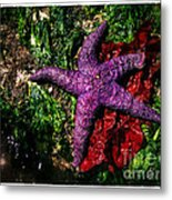 Right At Home Metal Print