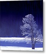 Rime Ice Covered Tree Yellowstone National Park Wyoming Metal Print