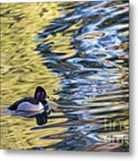 Ring-neck Reflections Metal Print