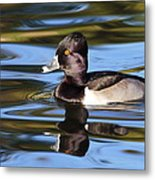 Rings Around Ring-necked Duck Metal Print