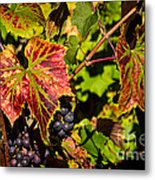 Ripe For The Picking Metal Print