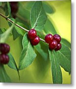 Red Berries Botanical Christmas Art Metal Print