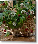 Wild Strawberries And White Clover Metal Print
