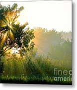 Rise And Shine Metal Print by Sue Stefanowicz
