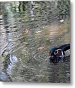 River Duck Metal Print