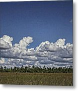 River Of Grass Metal Print by Anne Rodkin