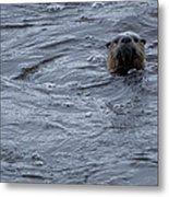 River Otter   #0695 Metal Print
