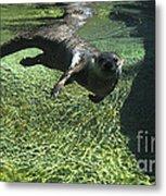 River Otter-7714 Metal Print
