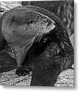 River Otter In Black And White Metal Print
