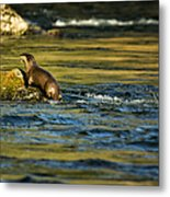River Otter On A Rock Metal Print