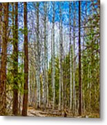 River Run Trail At Arrowleaf Metal Print