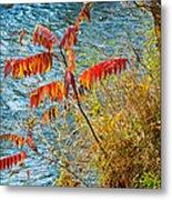 River Sumac Metal Print