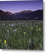 Rmnp Moraine Park Flora Sunrise Metal Print by Tom Wilbert