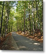 Road In Forest  Metal Print