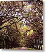 Road Of Trees Metal Print