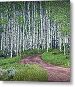 Road Through A Birch Tree Grove Metal Print