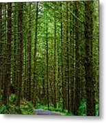 Road Through The Woods Metal Print
