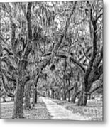 Road To Dungness Metal Print