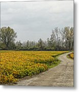 Road To The River Metal Print