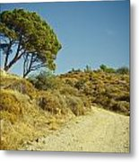 Road With Olive Trees Metal Print