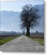 Road With Trees Metal Print