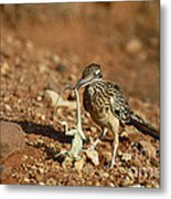 Roadrunner With Lizard Metal Print