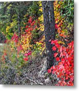 Roadside Fall Colors Metal Print