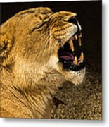 Roar Of A Lioness Metal Print